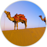 About Liwa Desert Safari Tour
